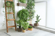Leinwandbild Motiv Green houseplants near white wall in room