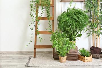 Green houseplants near white wall in room