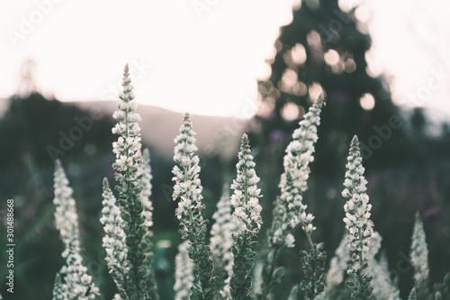 Poster Kaki White Lavender