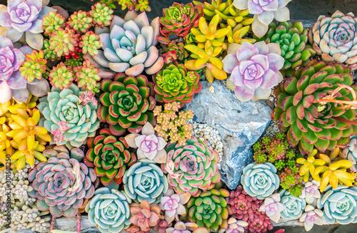 colorful Rectangular arrangement of succulents; cactus succulents in a planter - fototapety na wymiar