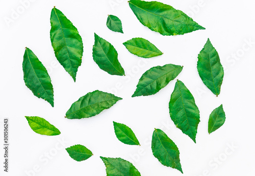 Fototapety, obrazy: Very beautiful, fresh green leaves, Green leaf isolated on white background.