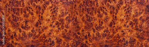 Foto op Plexiglas Brandhout textuur Amboyna burl wood striped Exotic wooden beautiful pattern