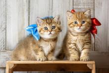 Cute Kittens Playing In Wood Shavings