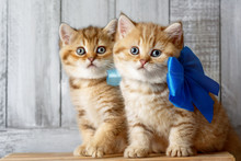Cute Kittens Playing In Wood S...