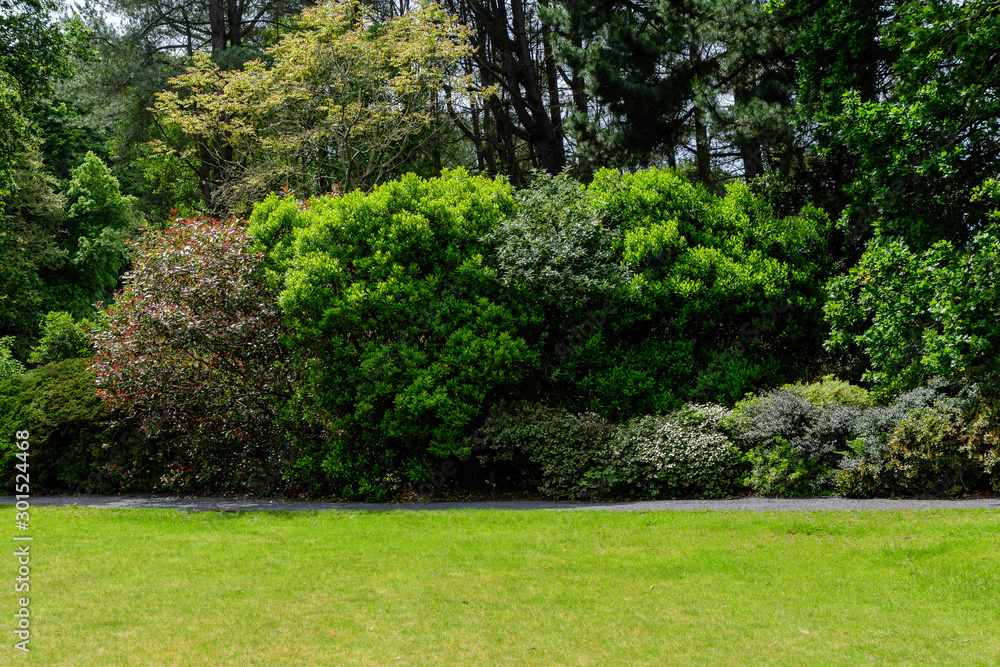 Fototapety, obrazy: Scottish landscape with wild green tree and grass in a garden in a sunny spring day, photographed with soft focus