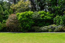 Scottish Landscape With Wild Green Tree And Grass In A Garden In A Sunny Spring Day, Photographed With Soft Focus
