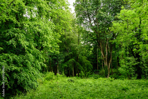 Fond de hotte en verre imprimé Arbre Scottish landscape with wild green trees and leaves in a forest in a sunny summer day, photographed with soft focus