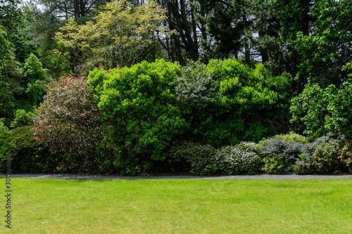 Fotobehang Bomen Scottish landscape with wild green tree and grass in a garden in a sunny spring day, photographed with soft focus