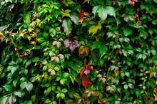 Multicolored Autumn Leaves Vir...