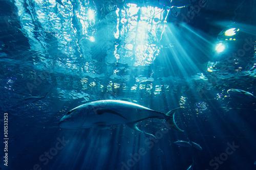 Photo  巨大水槽の魚たち