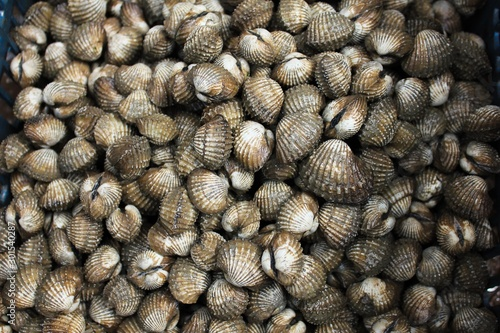 Fresh blood cockle or blood clam or cockle shell (Tegillarca granosa) background Fototapet