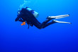 canvas print picture - Diving the Red Sea Egypt