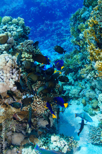 Fotomural Coral Reef at the Red Sea, Egypt