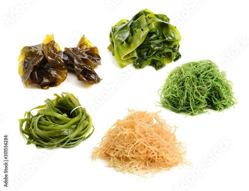 fresh green seaweed Fototapeta