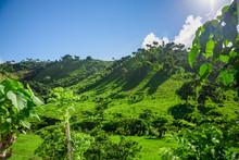 Dominican Republic Jungle Land...