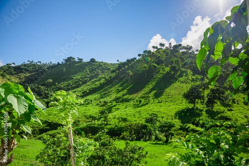Fotomural Dominican Republic jungle landscape