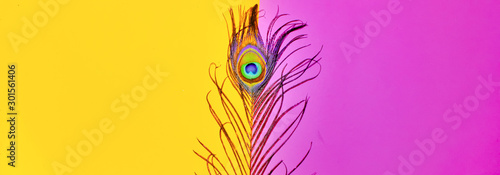 peacock feathers on pink background,peacocks tail on yellow background, text space ,written text space