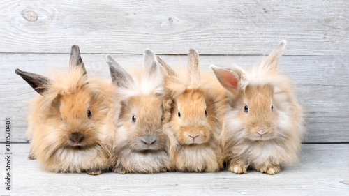 Fotografia Group of lovely bunny easter rabbits on wooden background