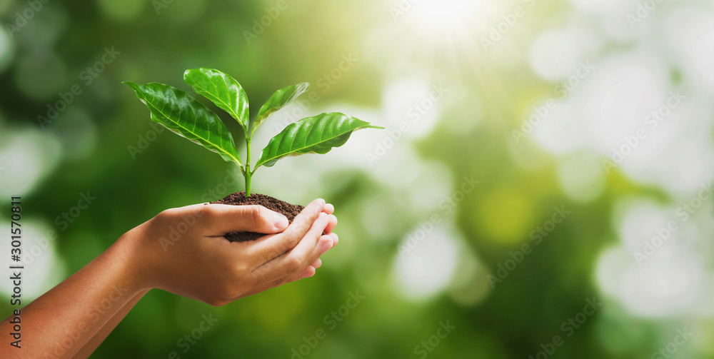 Fototapety, obrazy: hand holding young plant on blur green nature background and sunslight. concept eco earth day