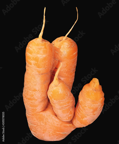 Fototapeta Carrot mutant, of unusual form isolated on a black background