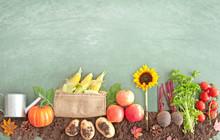 Autumn Organic Food Produce