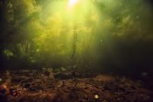 Underwater Freshwater Green Landscape / Underwater Landscape Of The Lake Ecosystem, Algae, Green Water, Fresh Water