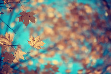 Branches Leaves Yellow Background / Abstract Seasonal Background Falling Leaves Beautiful Photo