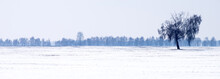 Panorama Of A Snow-covered Fie...