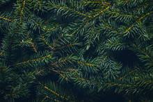Christmas Tree Branches. Christmas Concept, Nature, Winter. Background For Postcards. Flat Lay, Top View