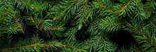 Christmas Tree Branches. The C...