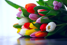 Bouquet Of Colorful Tulips / S...