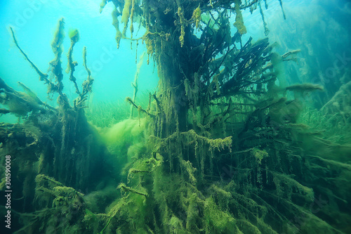 Foto auf Gartenposter Turkis mangroves underwater landscape background / abstract bushes and trees on the water, transparent water nature eco