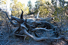 Deadwood With Frost