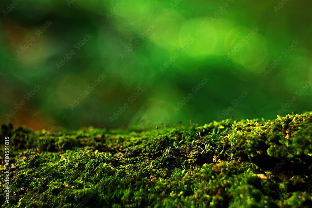 Fototapety, obrazy: macro moss landscape / green abstract natural view, summer forest, moss macro