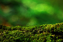 Macro Moss Landscape / Green A...