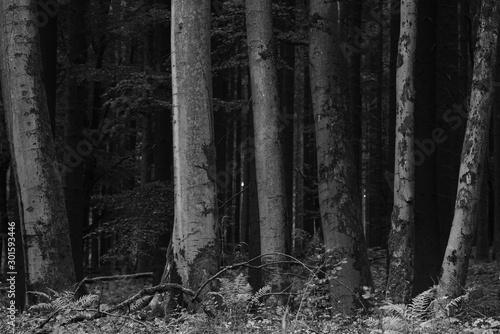 Montage in der Fensternische Darknightsky Old forest landscape