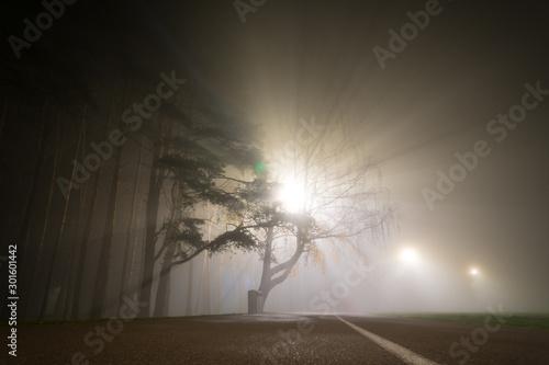 Fog in the autumn night park Fototapeta