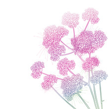 Corner Bouquet With Outline Verbena Or Argentinian Vervain Flower In Pastel Pink Isolated On White Background.