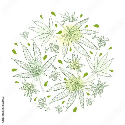 Fotografie, Obraz Round bunch of outline Cannabis sativa or Cannabis indica or Marijuana