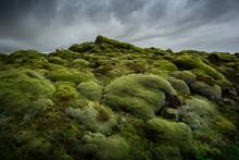 Green Moss Covered Volcanic La...
