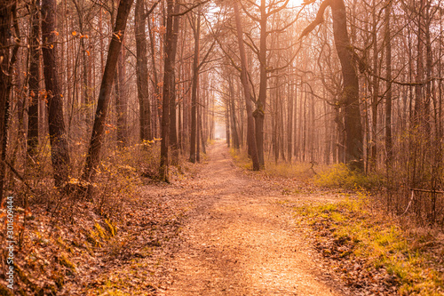 Obraz na plátně Ein Waldweg im Spätsommer