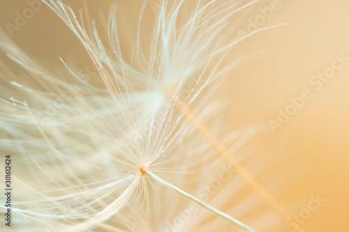 Foto auf Leinwand Makrofotografie Wunderschöne Detailaufnahme einer Pusteblume