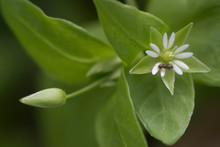 White Flower With Ant In Garden