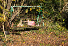 Old Shabby Neglected Garden Swing Seat