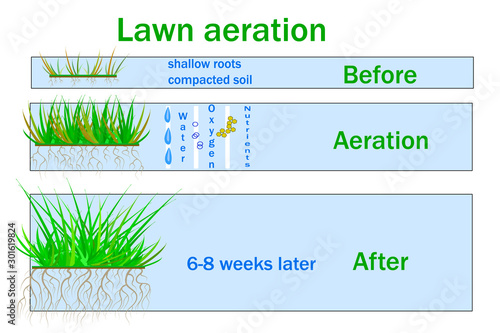 Fényképezés  Lawn aeration for active plant growth