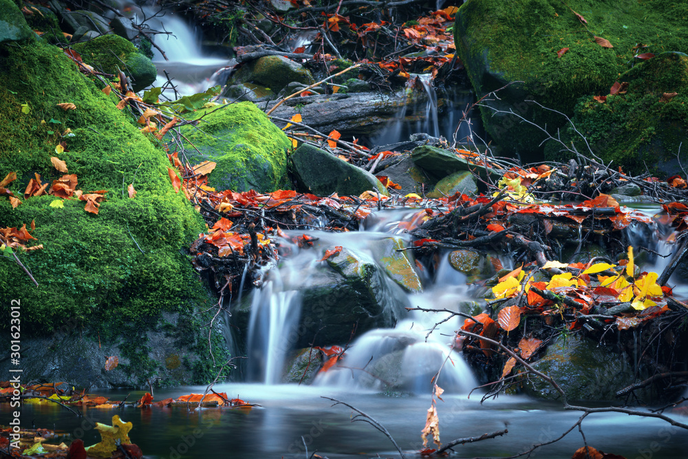 Fototapety, obrazy: Mountain water stream on stones. Autumn nature in mountain forest river with rock and green moss.