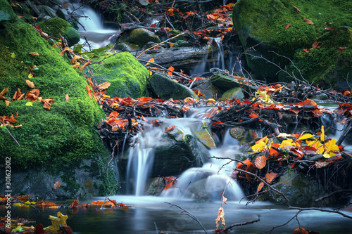 Garden Poster Forest river Mountain water stream on stones. Autumn nature in mountain forest river with rock and green moss.