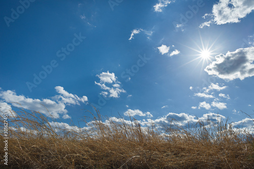 Fotografie, Tablou Sun and clouds over native eastern prairie grasses in central Virginia in early spring