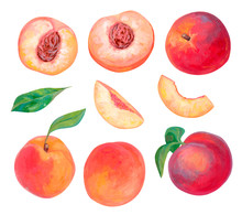 Hand Drawn Bright Fruits Set. Realistic Drawing With Acrylic Paint. Peach Fruits, Whole, Leaves, Cut And Slice Of Peaches Isolated On White. Botanical Elements For Design. Collection Of Organic Food.
