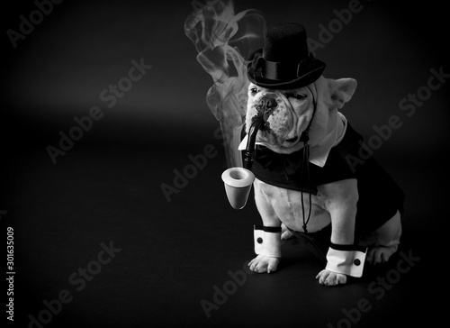 French bulldog dressed in tux smoking pipe.
